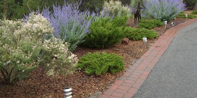 Perennials along Driveway