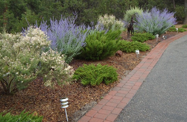 perennials along driveway santa fe nm landscapers native earth